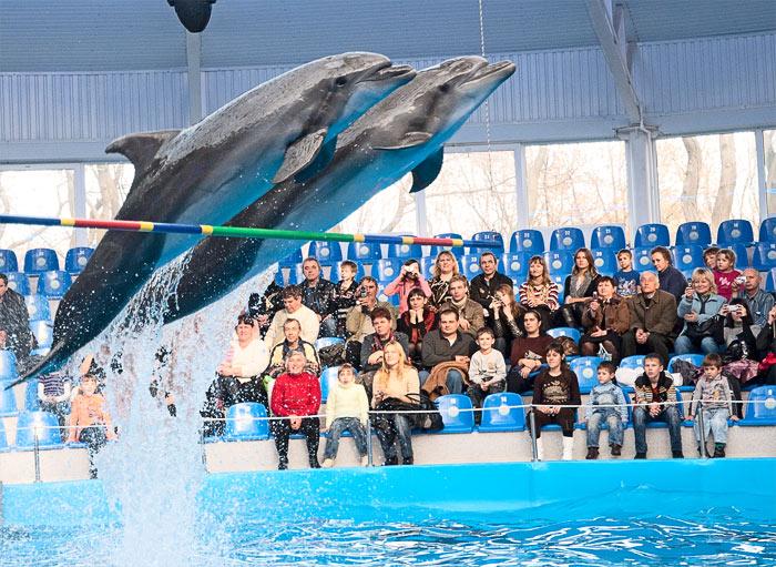 Новости: В Алматы всё же планируют строить дельфинарий
