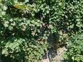 4-комнатный дом, 70 м², 4 сот., Казыбек би 39/2 — Айтеке Би за 10.5 млн 〒 в Каскелене — фото 11