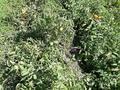 Дача с участком в 10 сот., Уйтас за 3 млн 〒 в Талдыкоргане — фото 8