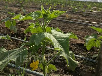Склад продовольственный 61.2 га, Желтоксан — Аль-Фараби за 30 млн 〒 в Унгуртасе — фото 16