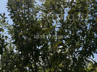 Дача с участком в 9 сот., Енбекшиказахский район 925 за 2.5 млн 〒 в  — фото 21
