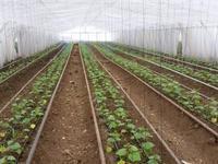 крестьянское тепличное хозяйство