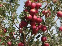 Сад крестьянское хозяйство 2 га за 42 млн 〒 в Акшах