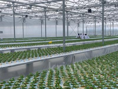 Промышленный тепличный комплекс за 650 млн 〒 в Боралдае (Бурундай) — фото 2