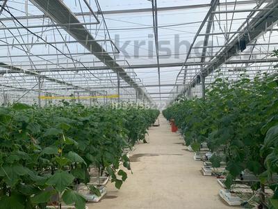 Промышленный тепличный комплекс за 650 млн 〒 в Боралдае (Бурундай) — фото 5