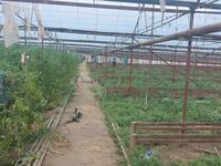 Производство, торговля, сельское хозяйство