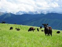 Эко-туризм, ферма, база для животноводства