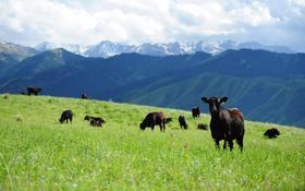 Эко-туризм, ферма, база для животноводства за 600 млн 〒 в Кегене