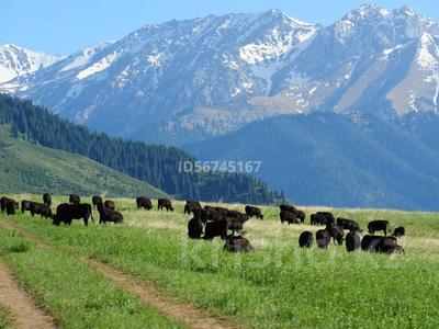 Эко-туризм, ферма, база для животноводства за 800 млн 〒 в Кегене — фото 6