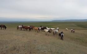 крестьянское хозяйство за 155 млн 〒 в Ульгилях