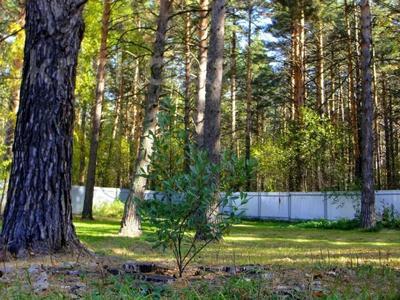 3-комнатный дом, 65 м², 23 сот., Село Кубовая ул. Зелёная 8 за 27 млн 〒 в Новосибирске — фото 14