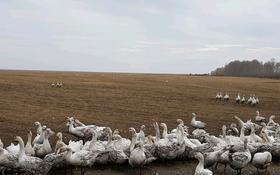 Гусинно-утинная ферма за 82 млн 〒 в Софиевке