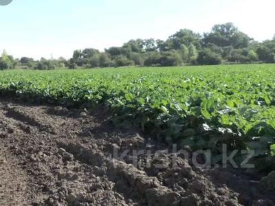 Продам действующий бизнес-крестьянское хозяйство за 500 млн 〒 в Аксу — фото 2