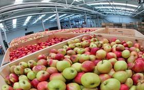 Склад продовольственный 1.44 га, Толе би за 120 млн 〒