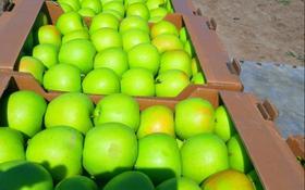 Плодоносящий яблоневый сад за 12 млн 〒 в Есик