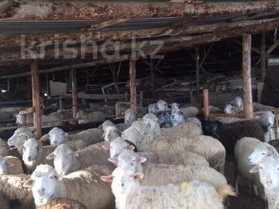 крестьянское хозяйство за 387 млн 〒 в Капчагае — фото 3