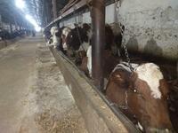 действующий МТФ (молочно товарный ферма) за 800 млн 〒 в Шелек
