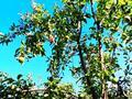 Дача с участком в 12 сот., Северная 177 за ~ 10 млн 〒 в Байтереке (Новоалексеевке) — фото 41