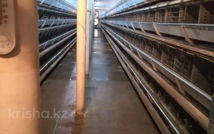 Птицеферма за 130 млн 〒 в Шымкенте, Абайский р-н