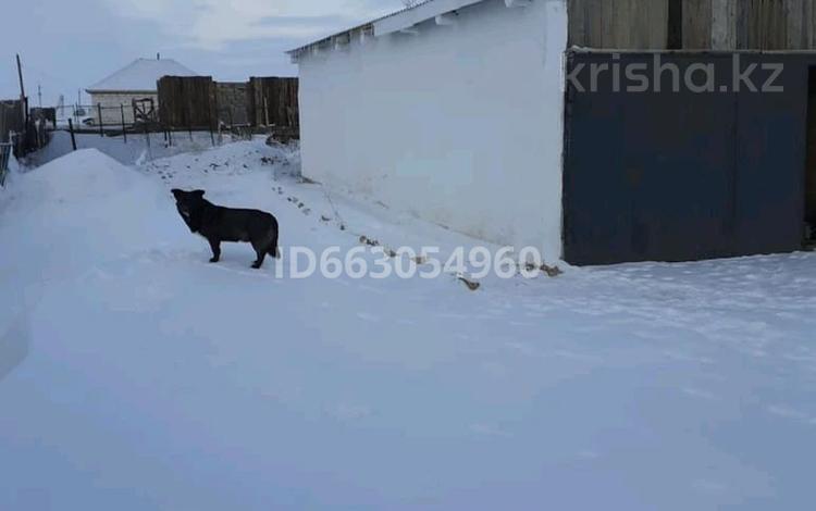4-комнатный дом, 130 м², 25 сот., Карабулак новый 6 — Сейфуллина за 6 млн 〒 в Степногорске