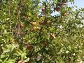 Дача с участком в 10.8 сот., Садовая за 8 млн 〒 в Кыргауылдах — фото 16