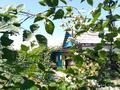 3-комнатный дом, 65 м², 7 сот., Абая за 15 млн 〒 в Боралдае (Бурундай) — фото 16