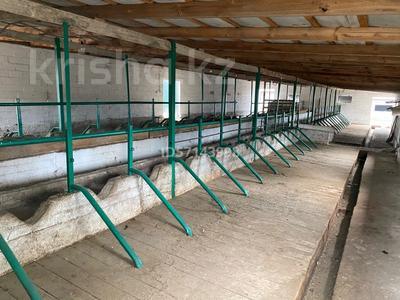 Дом с хозяйством мини ферма на 200 голов за 37 млн 〒 в в селе Шамалган — фото 14