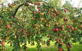 Яблоневый сад, алма бак, 76сот за 10.5 млн 〒 в Шымкенте