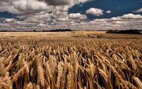 Продается земля сельскохозяйственного назначения (пашня, пастбища) за 140 млн 〒 в Акколе