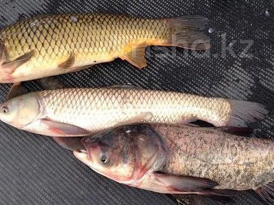 Охотно-рыболовное угодье за 600 млн 〒 в  — фото 5