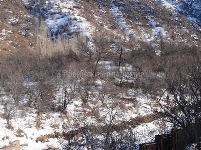 Участок 6 соток, Горный садовод за 3 млн 〒 в Алматы, Медеуский р-н — фото 3