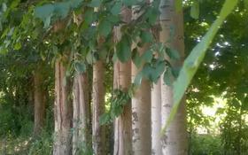 Крестьянское хозяйство (яблоневый сад с откормочной базой, небольшой пруд) за ~ 38 млн 〒 в Кулане