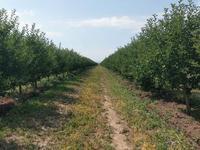Яблоневый сад 100га--действующий бизнес!