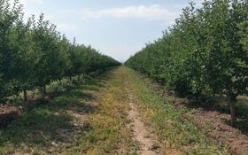 Яблоневый сад 100га--действующий бизнес! за ~ 2.1 млрд 〒 в Есик