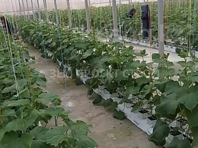 Тепличный комплекс за 105 млн 〒 в Туздыбастау (Калинино) — фото 4