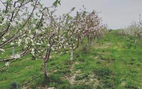 Яблоневый сад за ~ 66.6 млн 〒 в