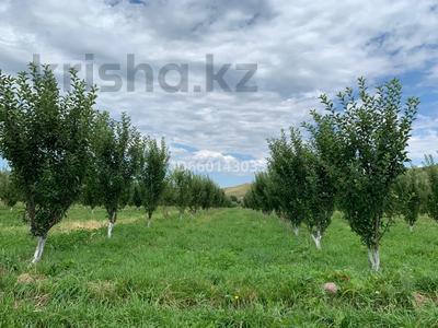 Яблоневый сад 4га за 42 млн 〒 в Каракемере — фото 2