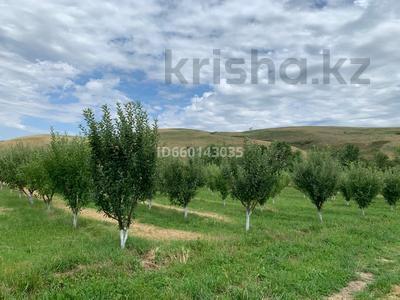 Яблоневый сад 4га за 42 млн 〒 в Каракемере — фото 3