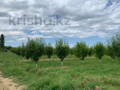 Яблоневый сад 4га за 42 млн 〒 в Каракемере — фото 4