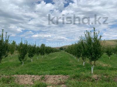 Яблоневый сад 4га за 42 млн 〒 в Каракемере — фото 5