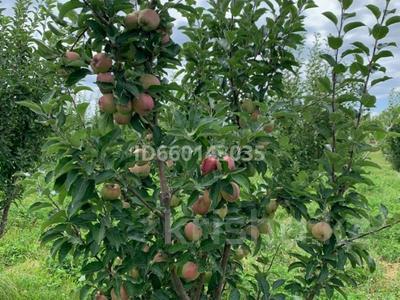 Яблоневый сад 4га за 42 млн 〒 в Каракемере — фото 7