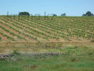 Производство, сельское хозяйство, иное, LE-442 за ~ 405.6 млн 〒 — фото 3