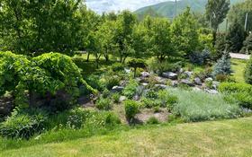 плодоносящий грушевый сад за 300 000 〒 в Жандосов