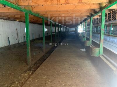 Ферма - фазенда с племенными овцами за 210 млн 〒 в Казаткоме — фото 5