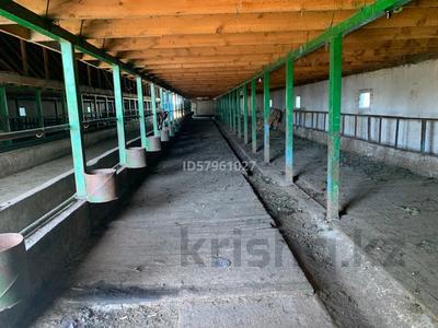 Ферма - фазенда с племенными овцами за 210 млн 〒 в Казаткоме — фото 6
