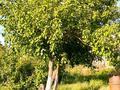 Дача с участком в 12 сот., Восточный правый 462 за 2.4 млн 〒 в Семее — фото 6