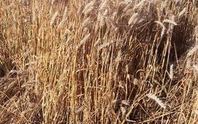 Действующее крестьянское хозяйство за 400 млн 〒 в Караой