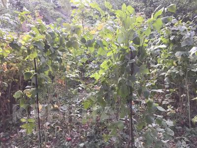 Дача с участком в 7 сот., Садоводческое товарищество «Панфиловец» 2 за 4 млн 〒 в Талгаре — фото 23
