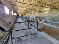 Действующая фермерское хозяйство со скотом