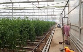 продаётся готовый тепличный бизнес, с хорошей доходностью за 110 млн 〒 в Шымкенте, Каратауский р-н